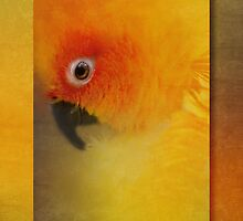 Eye of the conure by Jan Pudney