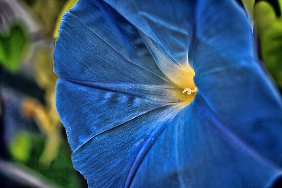 Heavanly Blue Morning Glory  by Sandra Lee Woods