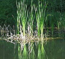 Reeds and their Reflections by Chris Gudger