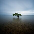 &quot;I Stand Alone&quot;  King Island, QLD - Australia by Jason Asher