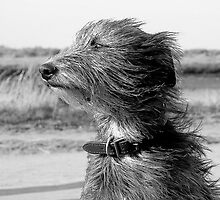 windswept by marc melander