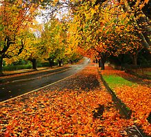 Autumn Drive by Felix Haryanto