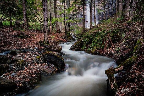 Falling through the Forest by Mieke Boynton