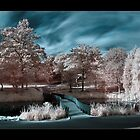 Barnes Park - Infrared by Wayman