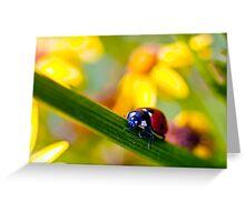 Ladybird on Ragwort Greeting Card