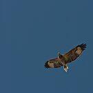 in flight by Gnangarra