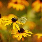 Abundance by Lois  Bryan