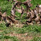 Sparrows In Flight by Barry W  King