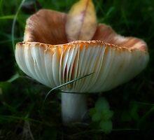 mushroom madness 2 by vigor