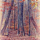 Autumn in the woods by Peter Dyrholm