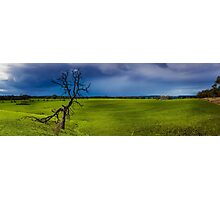 Country Victoria Tree in grass field. Photographic Print