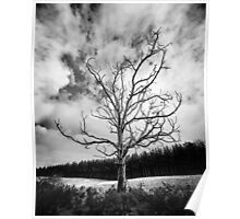 Black and White Alone Dead Tree on the highway Poster