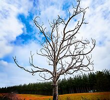 Alone Dead Tree on the highway by hangingpixels
