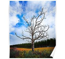 Alone Dead Tree on the highway Poster