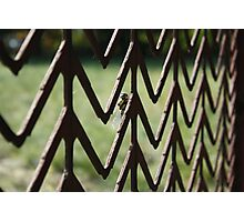 """ Insect Gateway Photographic Print"