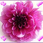 Pink Dahlia by Art-Motiva