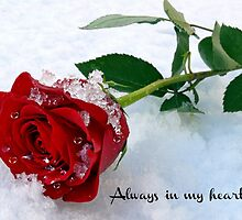 Always in my Heart by Morag Bates