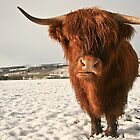 Highland Cow in Snow by cjdolfin