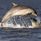 Moray Firth Dolphins by cjdolfin