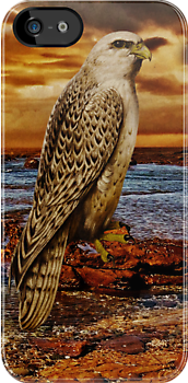 Falcon iPHONE Case by Pamela Phelps