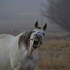 The Last Laugh by Linda Cutche