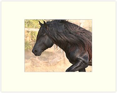 Quot Valor The Beautiful Big Black Horse With Lots Of Hair Quot By