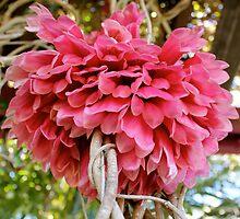 Pretty Pink - Mackay Queensland. by Margaret Stanton
