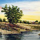 Wild Flowers Along the Cape Fear River by Jim Phillips
