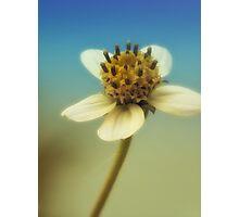 sweet sunshine Photographic Print