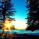 Sunrise between the Pine Trees by Andrew  MCKENZIE