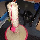 Kitten with scratching post/ball -(220812)- Digital photo by paulramnora