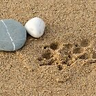 Take Only Memories.... leave Only Footprints. by Clare Scott