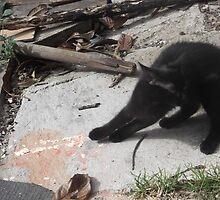 Kitten having a really good stretch -(220812)- Digital photo by paulramnora