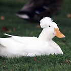 White Duck by George Lenz