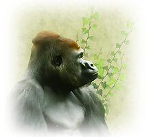 Ape by shalisa