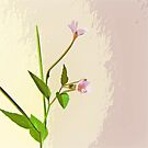 Broad leaf willow herb by shalisa