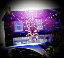 Garden Spider by Wonkstar
