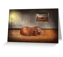Animal - The guinea pig Greeting Card