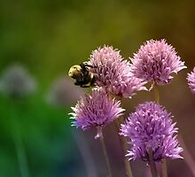 Bee in the Chives by Steph Peesker