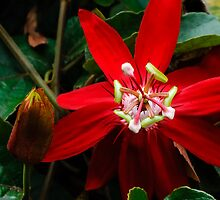 Mexican Passion by Dennis Reagan