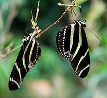 Butterfly Pair by Hannah Welbourn