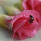 Lady bug mon Flower by TimeScape