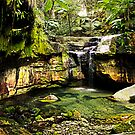 Moss Garden, Carnarvon Gorge, Queensland by Julia Harwood