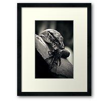 Sleeping Dragon Framed Print