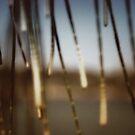 seashore sheoak I by © Karin  Taylor