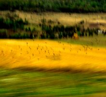 Crows In Yellow Field by diana1912