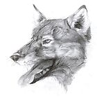 European wolf by A V S TURNER
