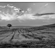 Lonely tree climbing the hill, in black & white by CreaRestless