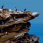 Cormorants at Warnambool by Yukondick