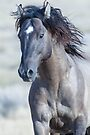West Desert Stallion by Robbie Knight